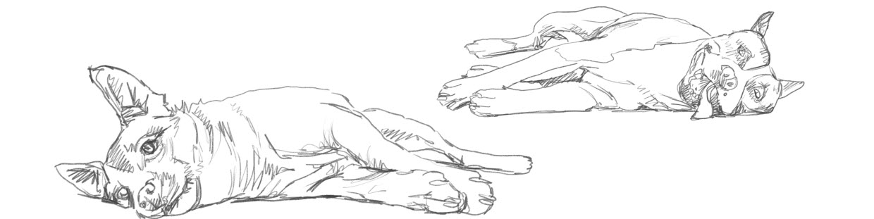 Dogs pencil sketch laying down