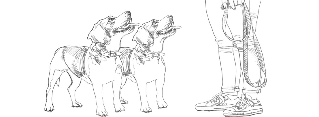 Dogs pencil sketch walks